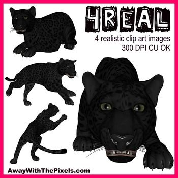 4 Real! 4 Realistic Panther Clip Art Images - only $1 - commercial use OK