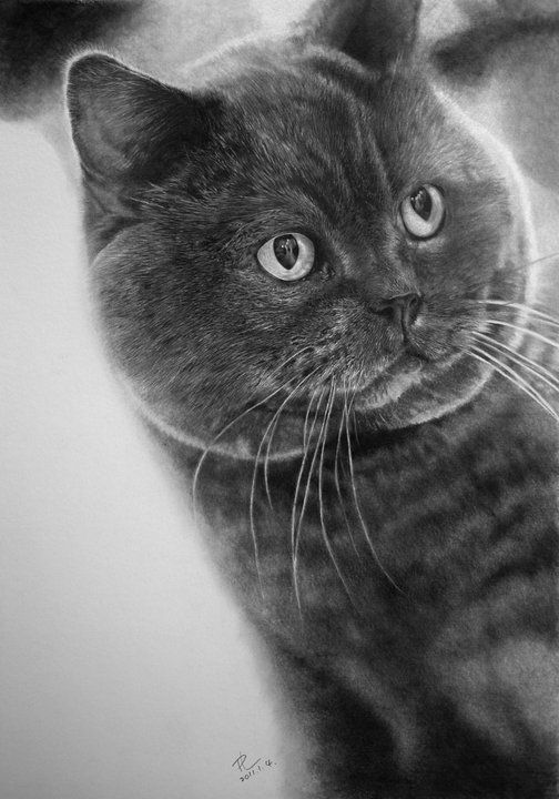 Mind-Blowing Photorealistic Pencil Drawings of Cats - artist Peter Lung