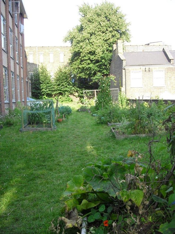 The garden looking lush!