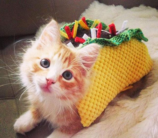Tacos + Kittens FTW.