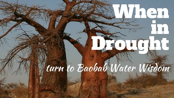 ECO- World Water Day Blog Post