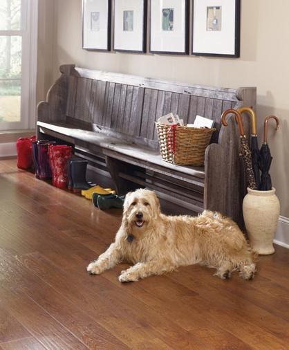 Best Flooring For Dog Owners By Enhance Floors U0026 More
