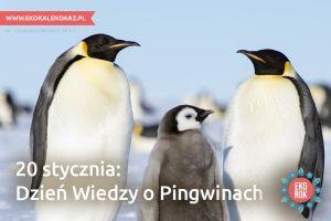 pingwin2