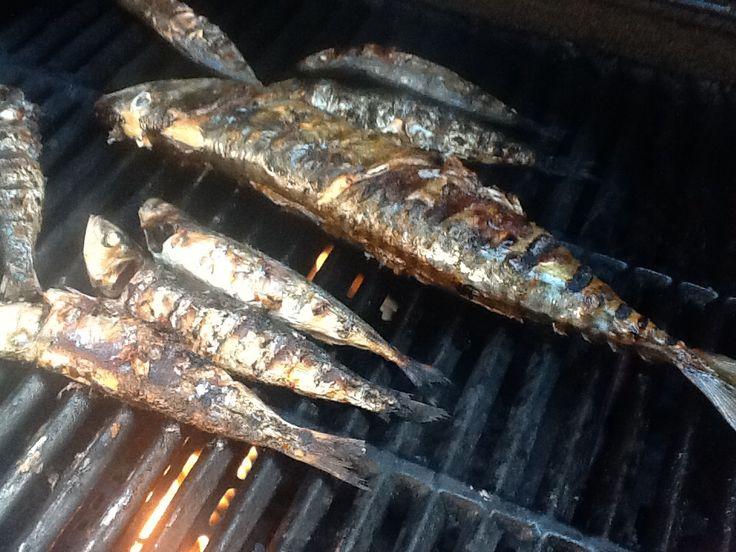 Grilled Mackerel and Sardines.