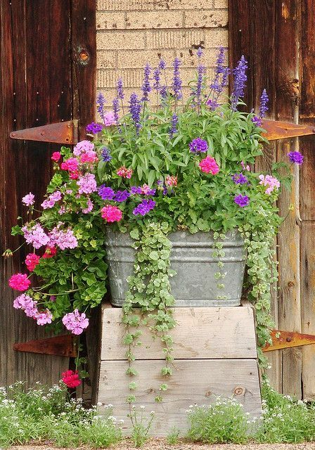 Tub filled with trailing flowers.