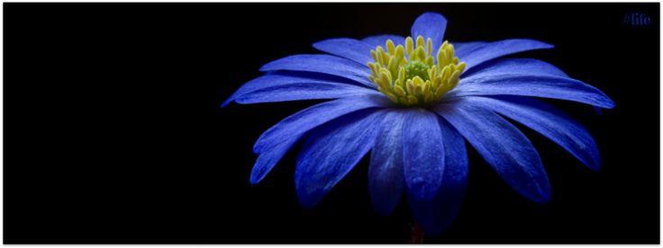 #life blue flower