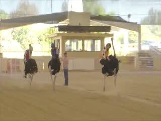 """""""O GRITO DO BICHO"""": Corrida de avestruzes com chegada falhada ... #ogritodobicho #falabicho"""