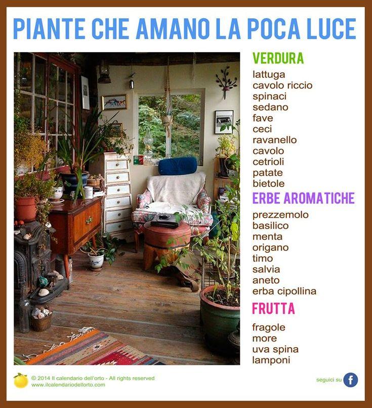 Pi di 25 fantastiche idee su piante da balcone su - Calendario trattamenti piante da frutto ...