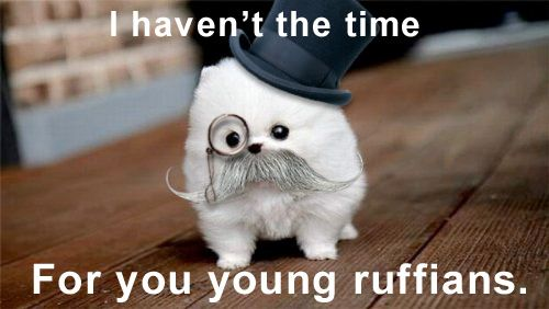 .: Blog Comment, Cutest Dogs, Animal Quotes, Puppys, Funny Stuff, Funny Truths, Die Laughing, Animal Monocle, Tops Hats