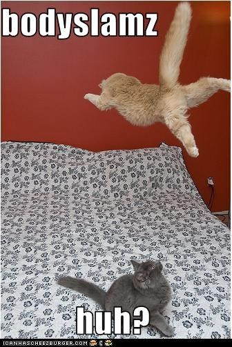 Grey Beard the Cat is amazed at the height of Freddy the Flyin' Feline's aerial attack...