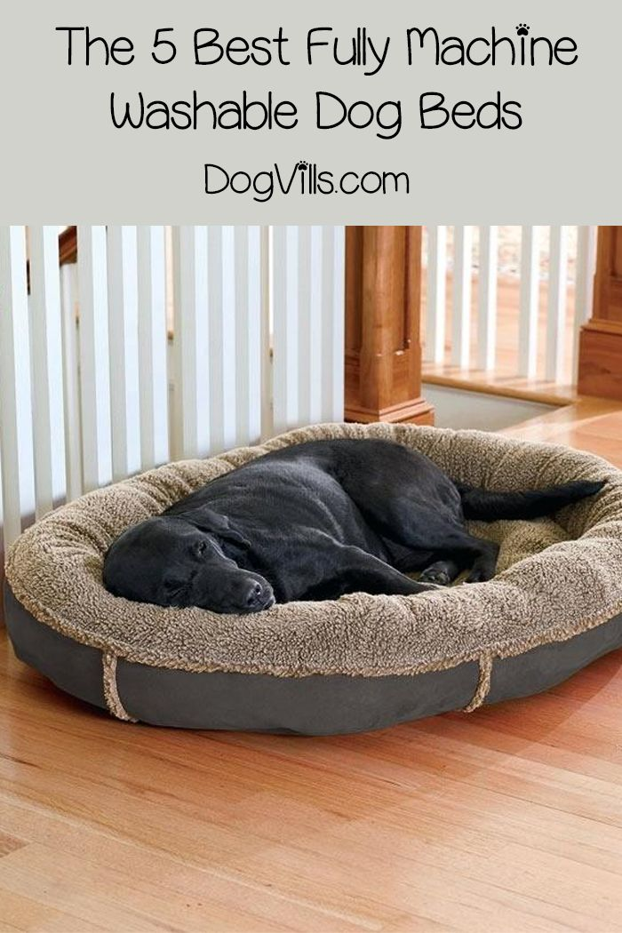 The 5 Best Fully Machine Washable Dog Beds Cool Dog Beds Washable Dog Bed Dog Bed