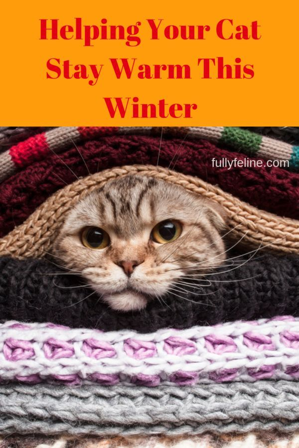 Keeping Cats Warm Keep Your Cat Comfortable This Winter Cats Baby Cats Cat Ages