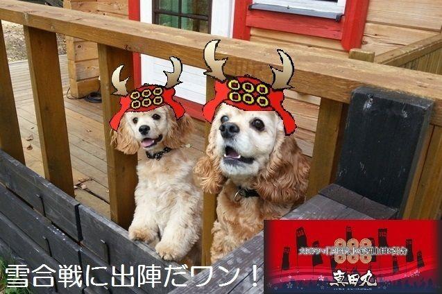 信州菅平高原でペット連れで宿泊するなら 犬と泊まれる宿 dogコテージjamswan プライべートドッグラン付北欧ログコテージ 犬 ペット お出かけ