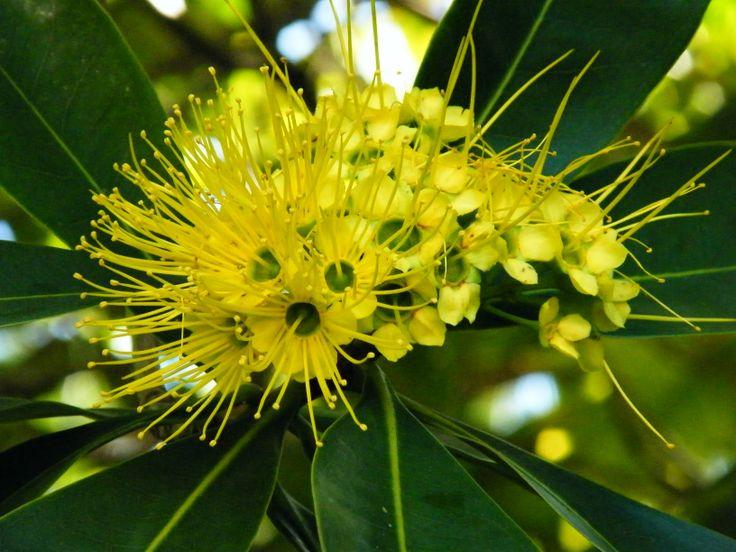 Tropical Flower Port Douglas holiday 2008