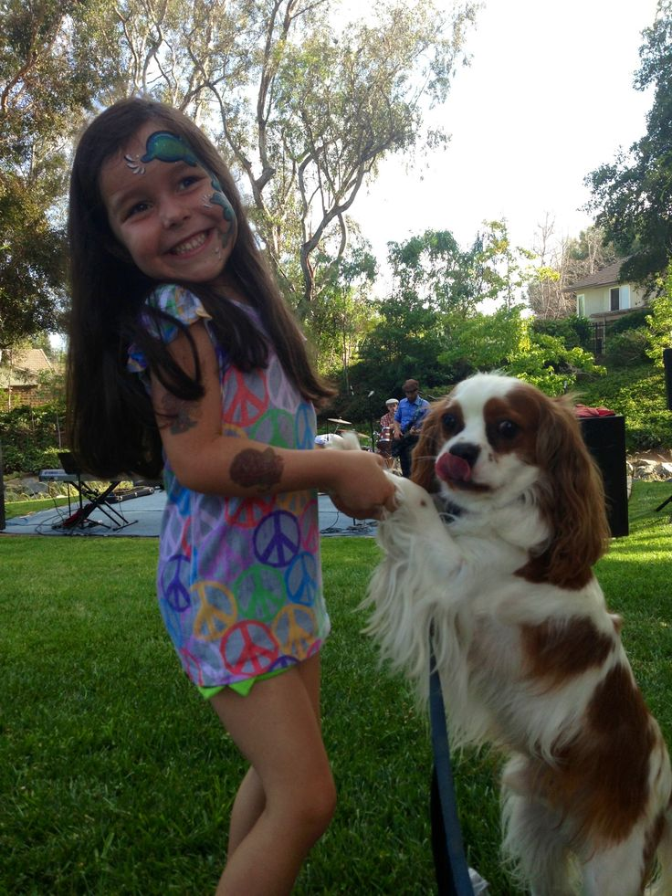 CKCS Hobbs adopted out of Cavalier Rescue USA Don't they find the perfect matches!