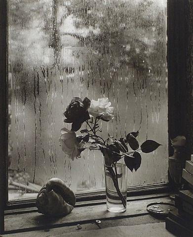 Josef Sudek, The Last Rose of Summer (from The Window of My Studio)