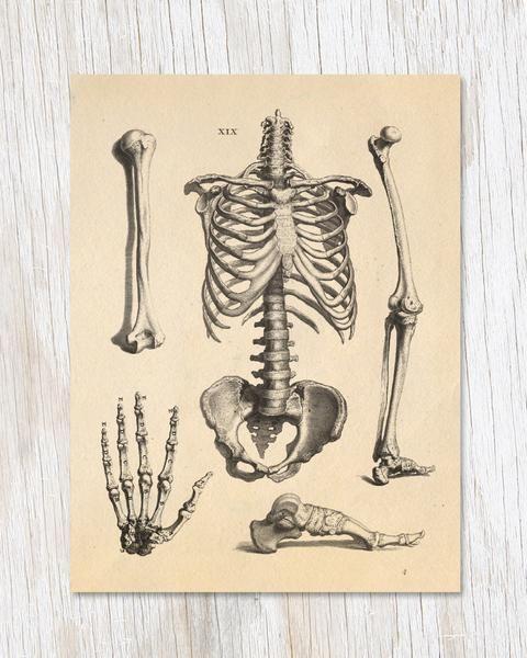 Skeleton Anatomy Card - Cognitive Surplus