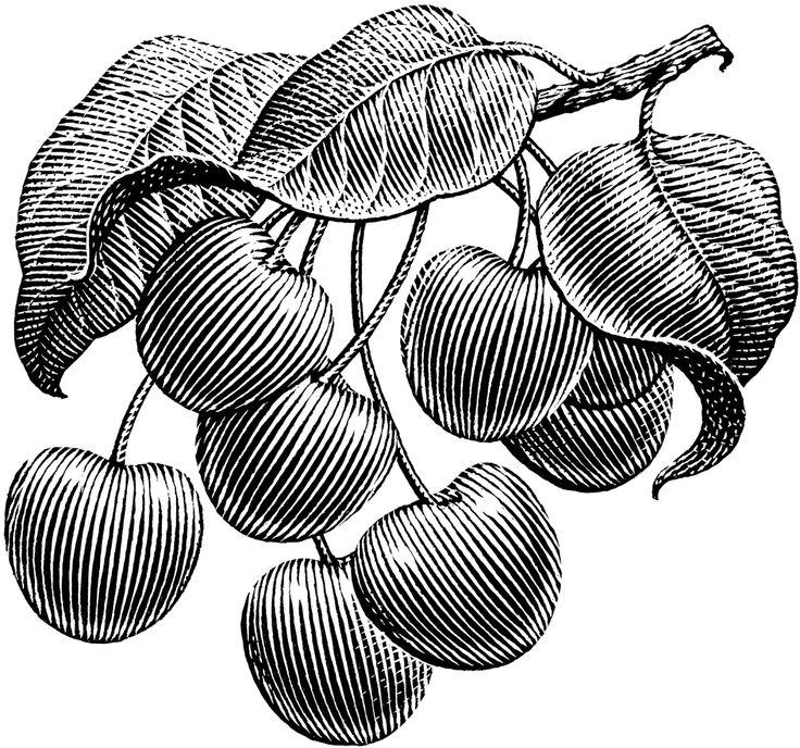 Cherries — by Michael Halbert