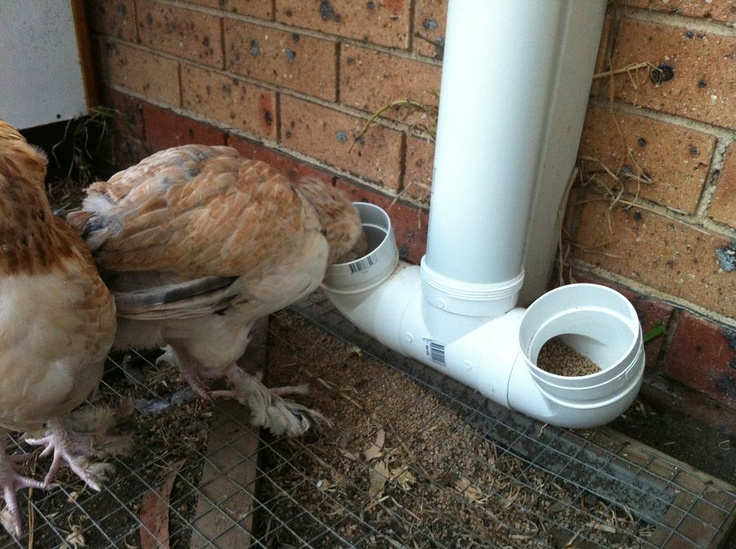 The PVC Chicken Feeder I am making.  This one was made by appps at www.backyardchickens.com