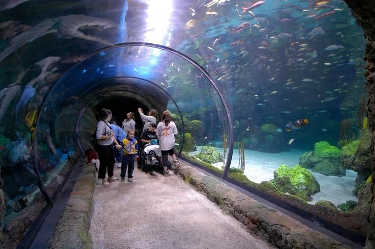 169 Best Aquariums Images On Pinterest Aquariums Reef