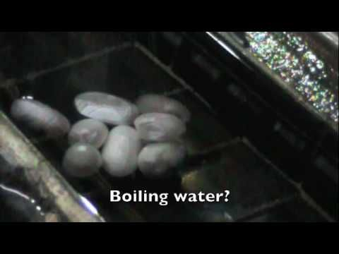 This video tells the story of silk production in Shanghai, China starting with the eggs of silkworms to worms' production of fibers to make their cocoons. Th...