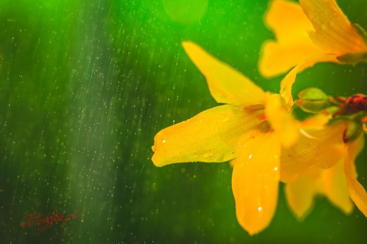 Google+ #macro #macrophotography #kwiatek #flower #plant #fotonotek