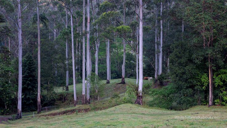 Edge of the Timber Country Imbil, Queensland, Australia