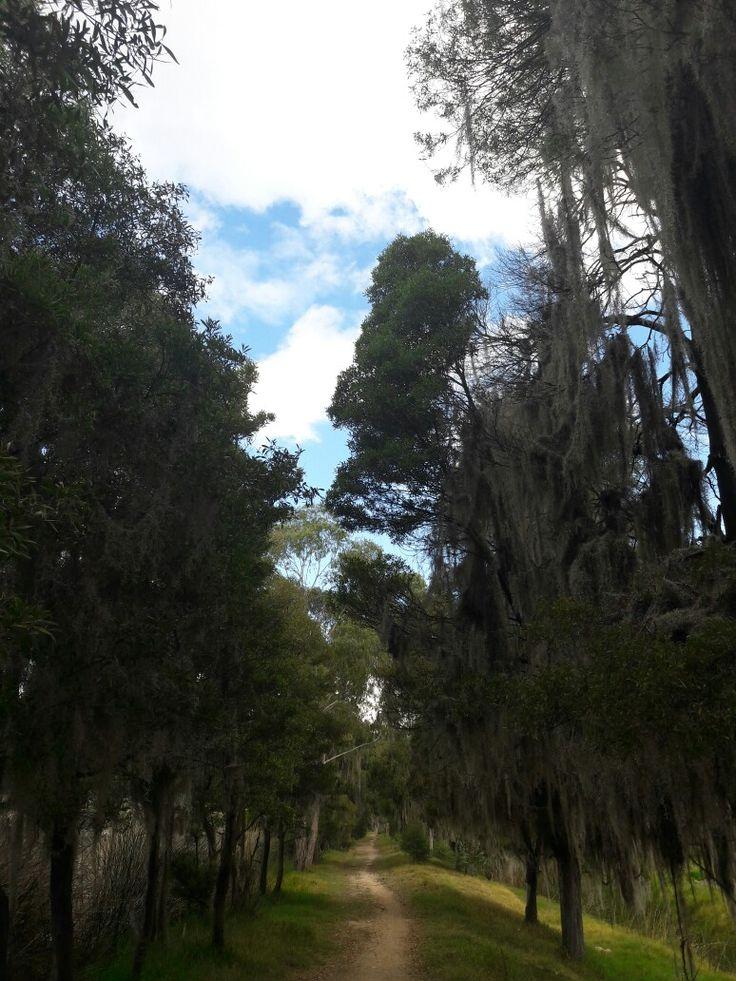 #forest #Way #Boyaca