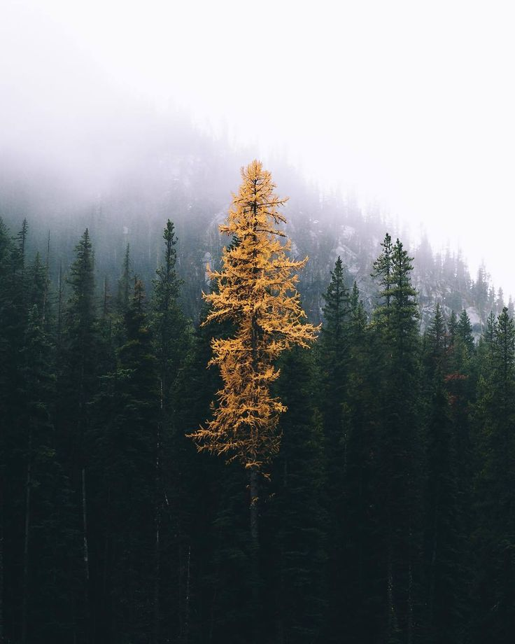 The last bit of beauty before  death ~ETS ~ETS #forests