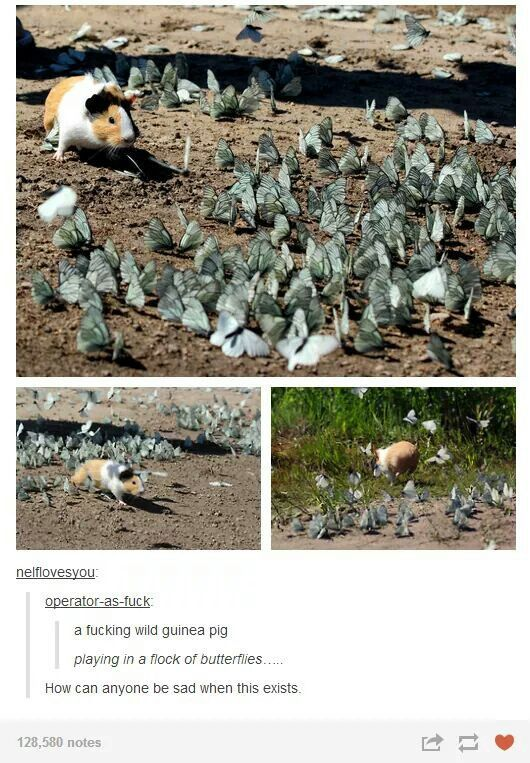 I thought he was playing in a flock of origami dol…