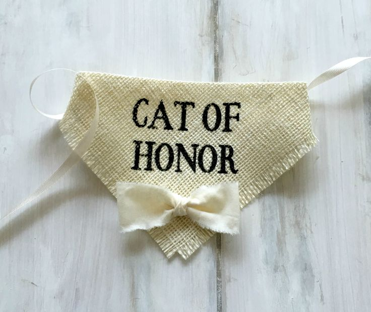 Cat of Honor - Wedding Cat Bandana with Bow tie...I want to do this!! I wish Anth liked cats....