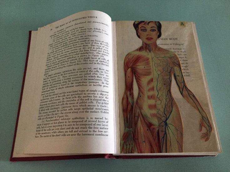Vintage 1955 Physiology and Anatomy Textbook Human Body Diagrams 1950's Nursing  | eBay