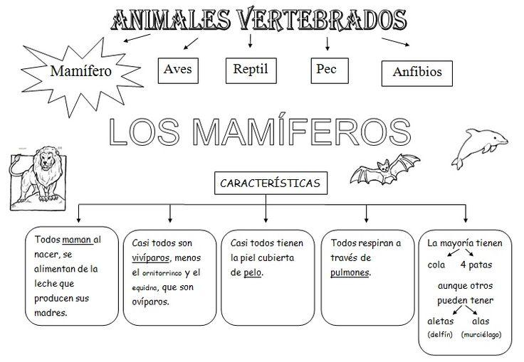 Dibujos de animales vertebrados e invertebrados para colorear - Imagui