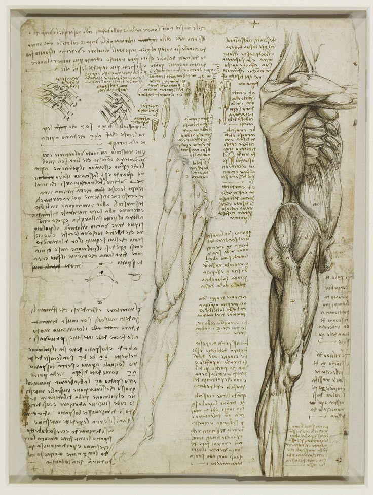 129 besten Fascia Bilder auf Pinterest | Anatomie, Menschlicher ...
