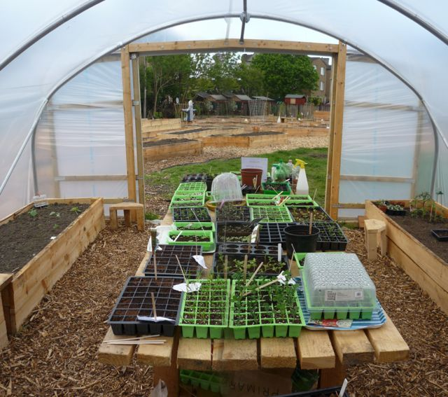 Polytunnel layout ideas - I like the idea of using a table in the polytunnel for seedlings - our old dining table perhaps?