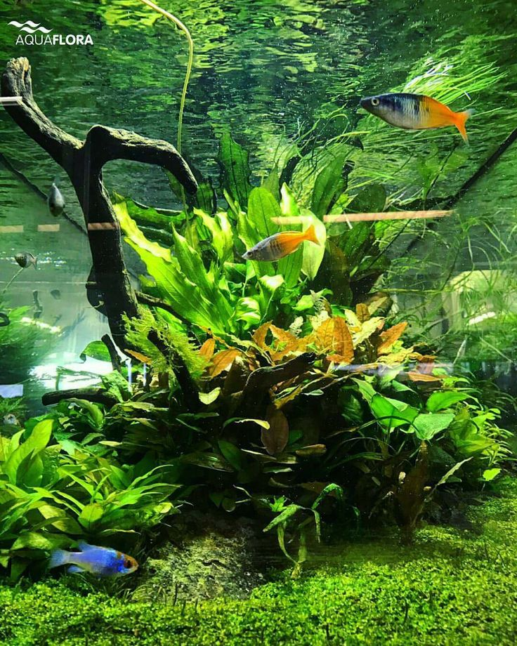 Freshwater Aquascape: 792 Best Images About Aquariums On Pinterest