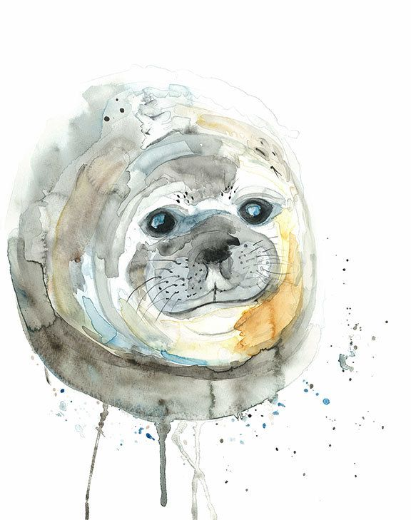 Watercolour Seal Print Elephant Seal Pup A4 Or 8 X 10 Marine
