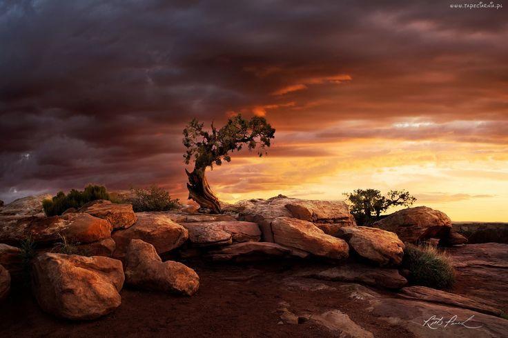Zachód, Słońca, Kanion, Kamienie, Drzewa