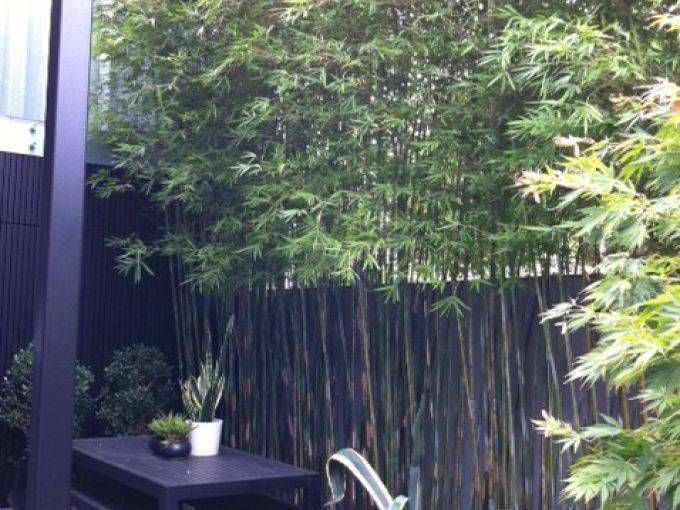 33 best Bamboo screening images on Pinterest Landscaping Bamboo