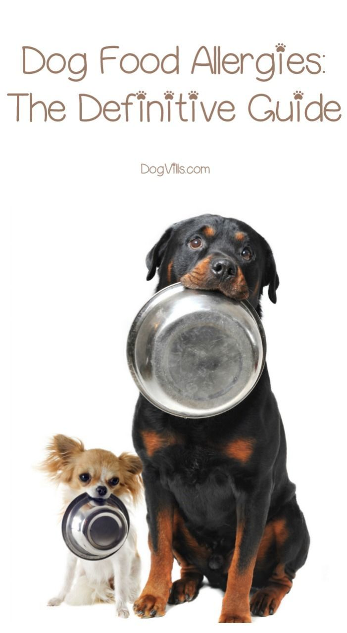Food Allergies In Dogs The Definitive Guide Best Dog Food Food
