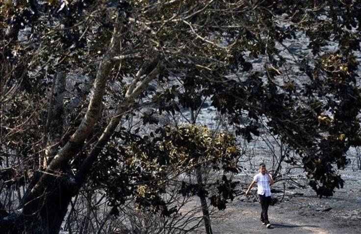 """El fuego da una tregua a Galicia tras quemar 7.000 hectáreas Un """"gallego"""" como Rajoy, solo sabe decir q ve """"difícil"""" la lucha contra los incendios porque es """"muy fácil hacer el daño""""... con su legislación, que permite el negocio de la madera quemada y la recalificación del suelo, además de la ausencia de políticas PREVENTIVAS."""
