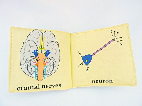 Baby's First Neuroscience Book Second Edition by VerdantViolet, $30.00