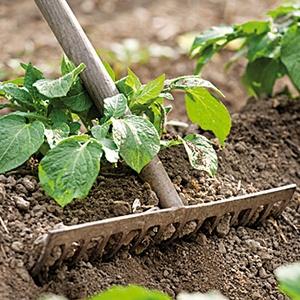 Comment avoir une bonne récolte au potager