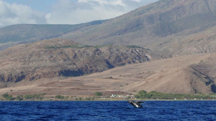 Olowalu in Lahaina, HI