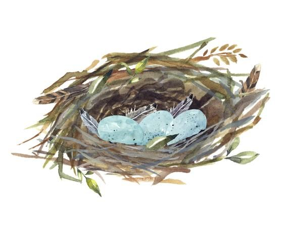 Spring Watercolor Clipart Set Birds Eggs Nest Spring Wreath