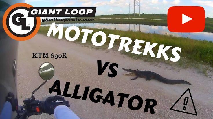 GIANT LOOP MOTOTREKK vs. Alligator KTM 690 R - YouTube