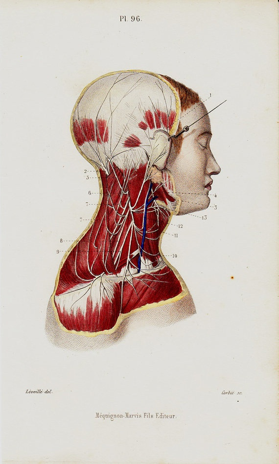 177 Best Anatomy Medical Images On Pinterest Human Anatomy