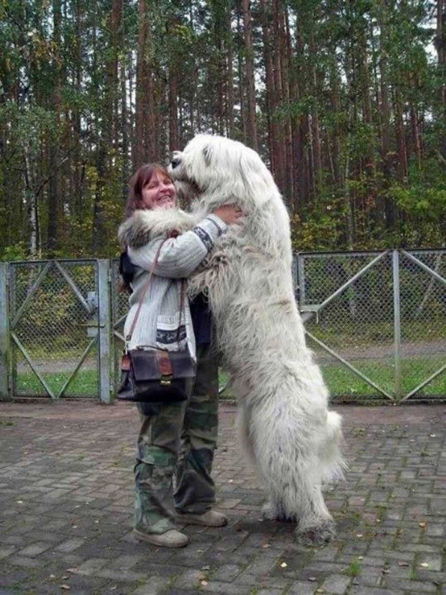 Big Dogs - 44 Pictures