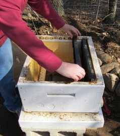 Great Bee Keeping Information including links to some free kindle e-books from The Joy of Bees.