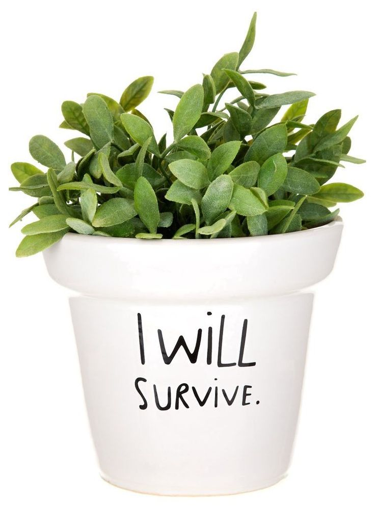 #Pot de fleur I WILL SURVIVE Mags sur #Zalando